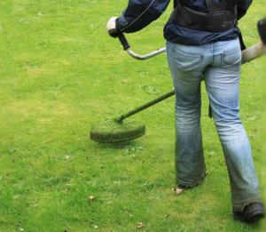 Cutting grass with strimmer